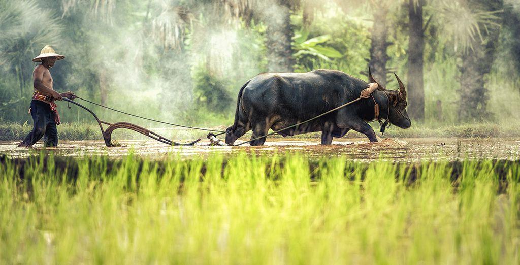 Vous traverserez des paysages agricoles authentiques