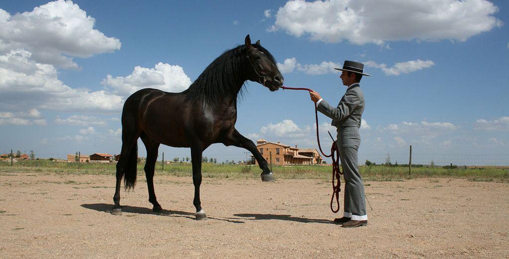 Montez à cheval...