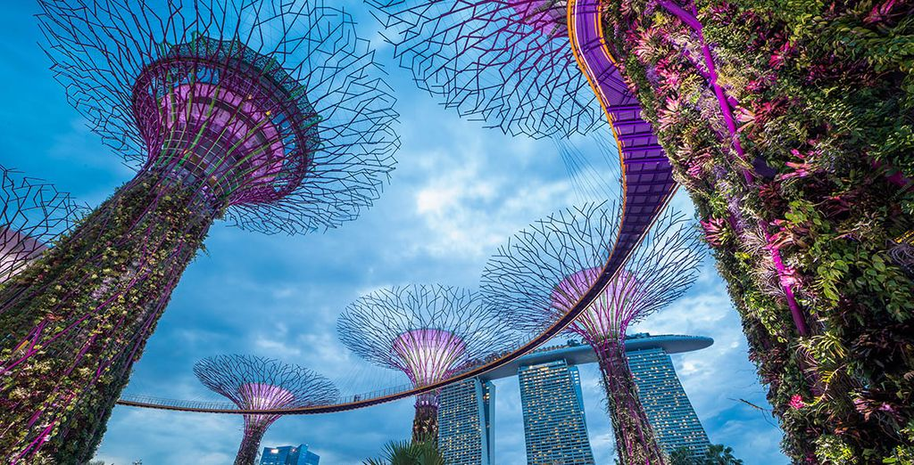 Fotografia del Supertree Grove a Singapore