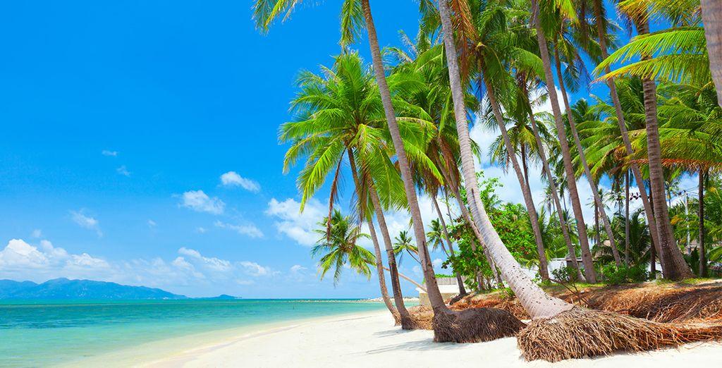 Paysage de Koh Samui, bord de plage
