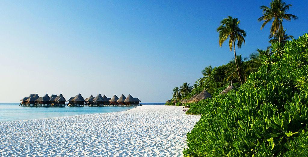 Immergetevi in questo paradiso tropicale unico al mondo
