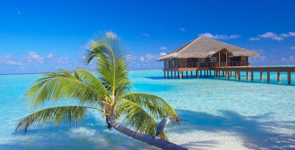 Il Resort è ubicato lungo il perimetro esterno dell'Atollo