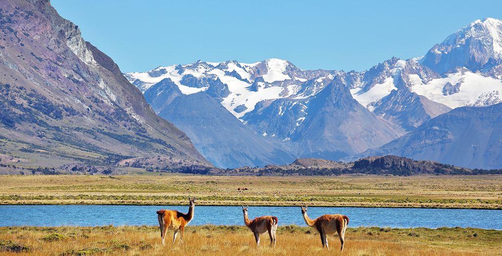 Farete un'escursione al Parco Nazionale Terra del Fuoco, unico parco sulla costa in Argentina