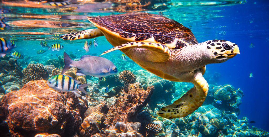 e ammirate i fondali mozzafiato della barriera corallina