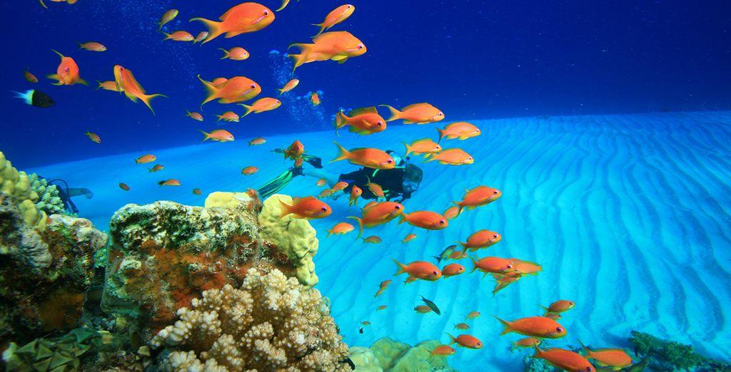 Senza dimenticarvi di scoprire le meraviglie dei fondali del Mar Rosso