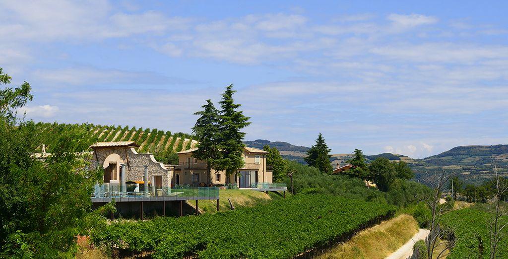 Visitate poi i dintorni: vigne, colline e natura