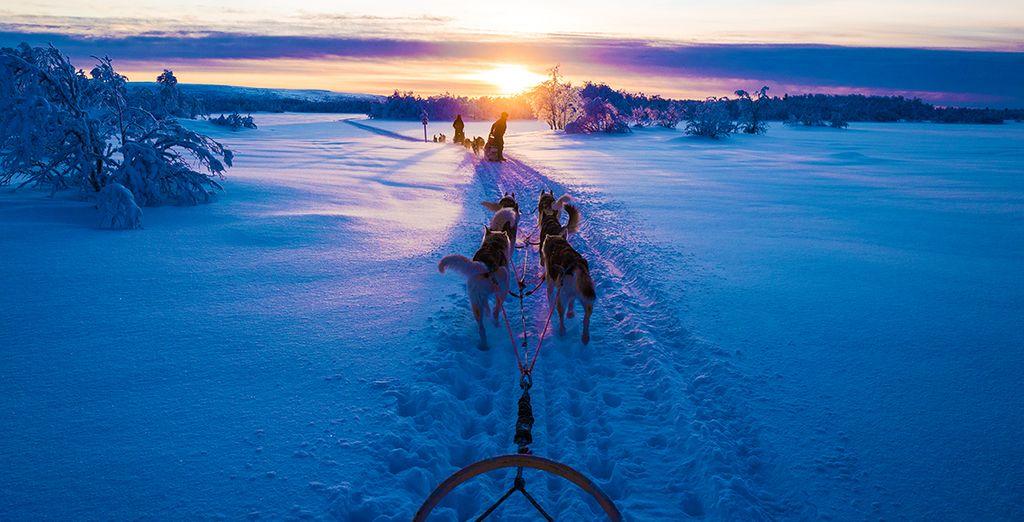 Fotografia di una sosta in Finlandia e cane da slitta