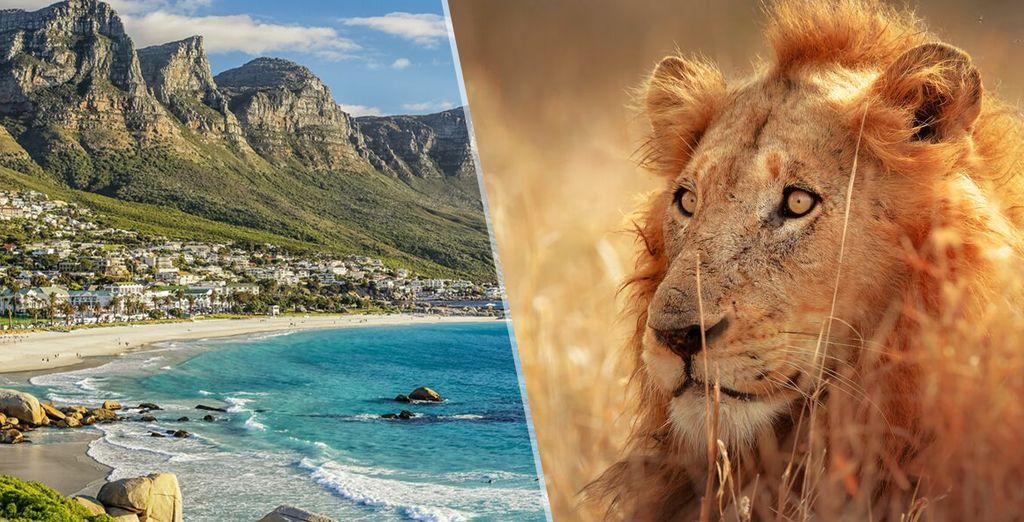 Tour del sud africa speciale capodanno voyage priv fino for Sud africa immagini
