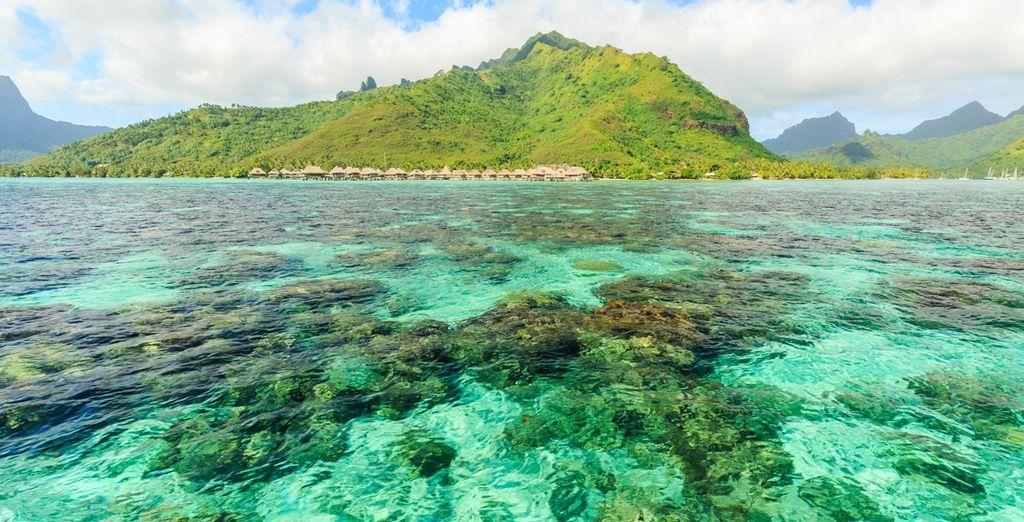 Combinato Polinesia: Isole della Società e Tuamotu