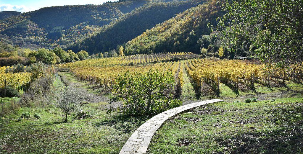 immersi nel verde delle valli del Chianti
