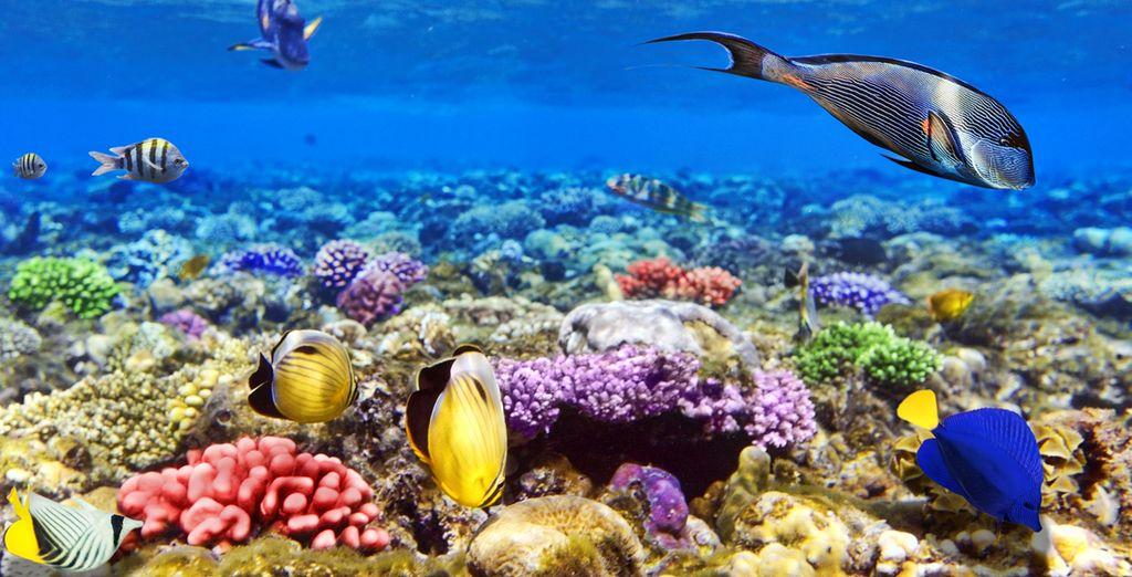 Scopri le isole Maldive e i suoi fondali marini, con mille pesci e coralli colorati