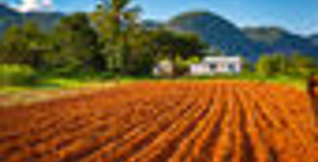 Een agrarische regio