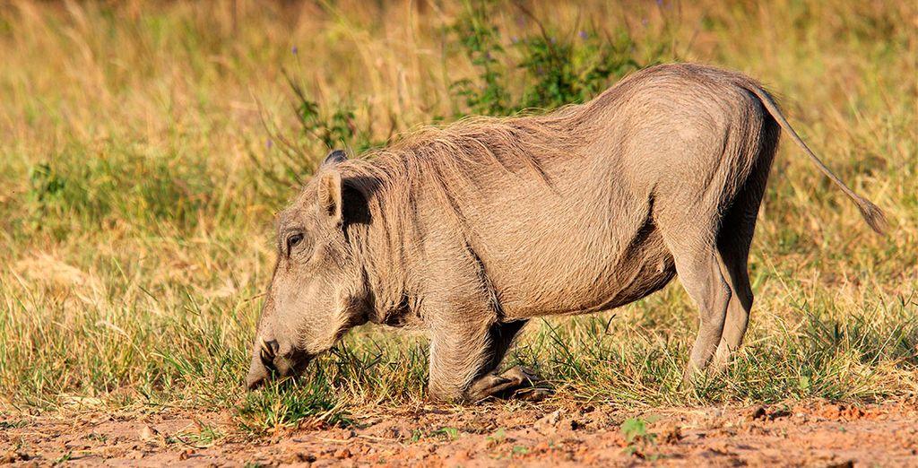 Bij een verblijf van 10 nachten gaat u op safari in Shimba Hills