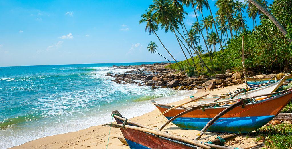 Ontdek Sri Lanka, met weelderige natuur en paradijselijke stranden