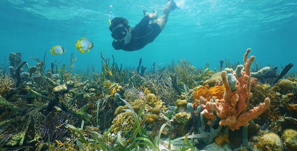 En ook de onderwaterwereld is klaar om ontdekt te worden