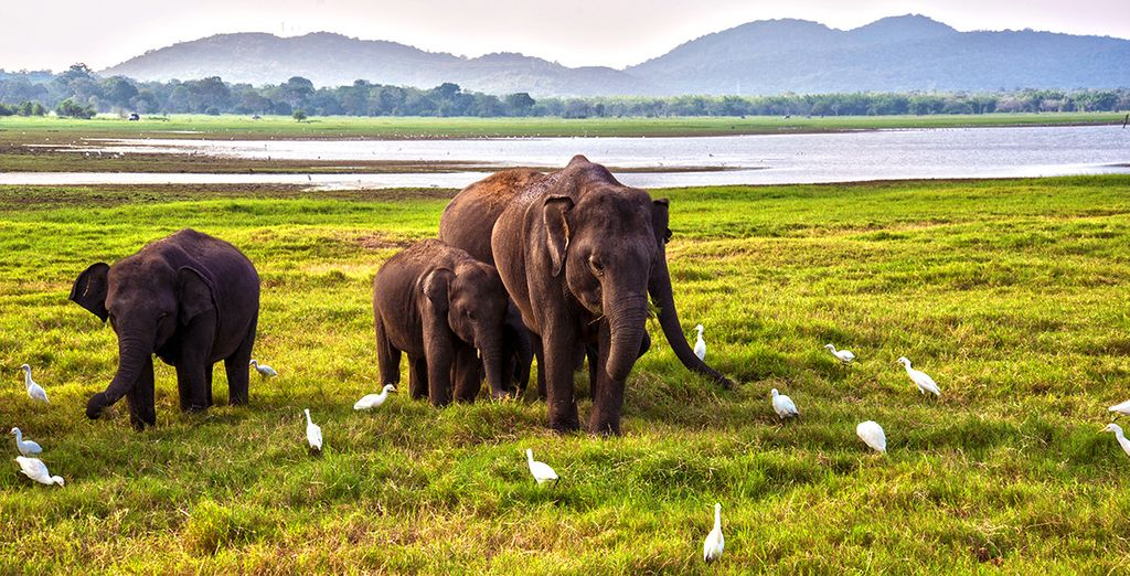 En oog in oog komt te staan met majestueuze olifanten
