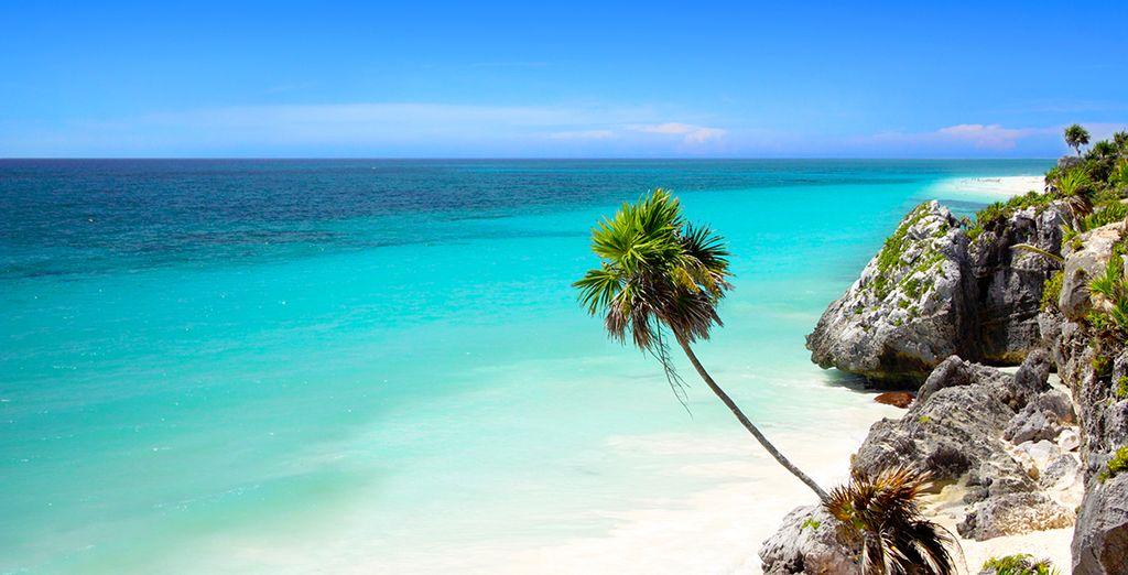 Zin in een avontuur in de Mexicaanse zon?