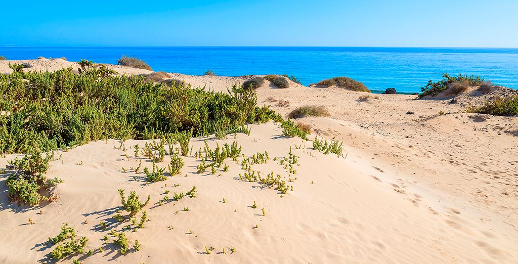 Corralejo Dunes national park in Fuerteventura