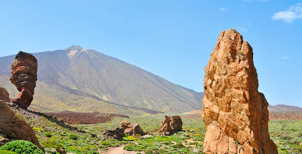 Discover the wildlife of the canary islands