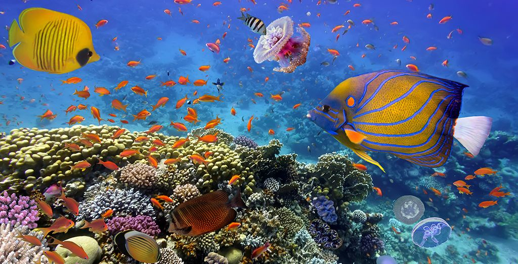To the rich and colourful marine life