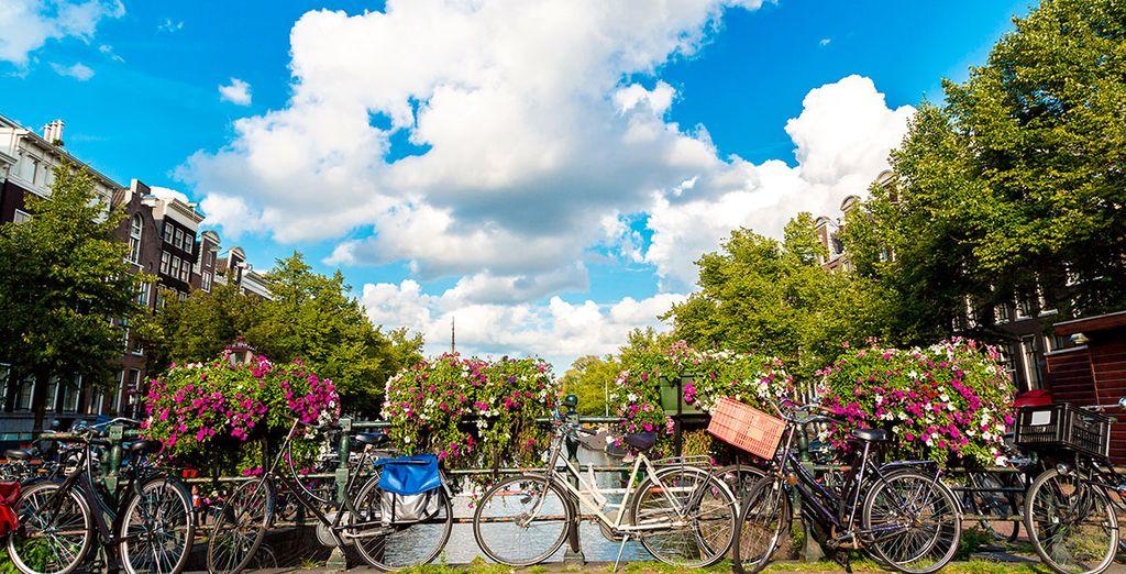 Stays in Amsterdam