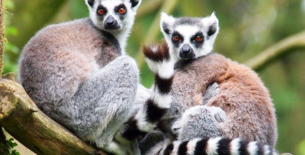 holidays to Madagascar