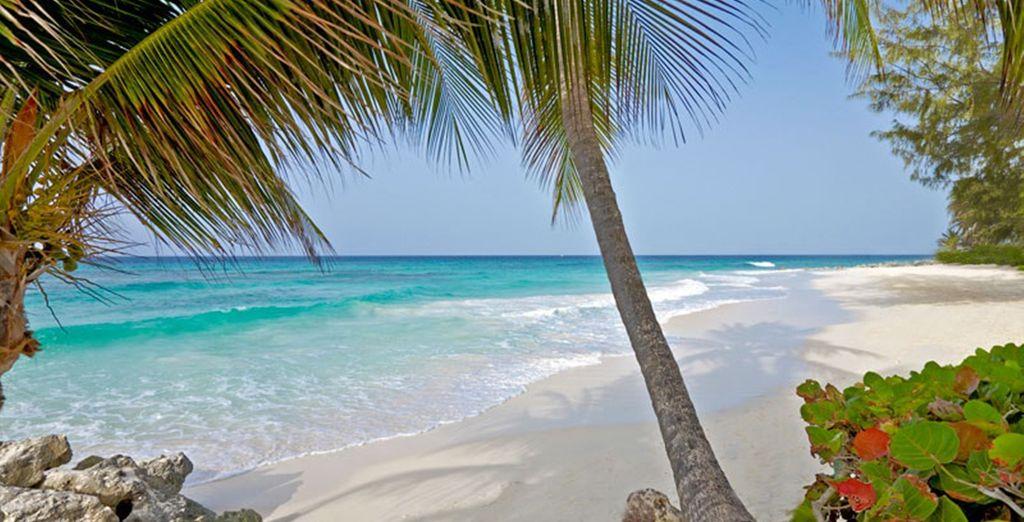 Caribbean style!