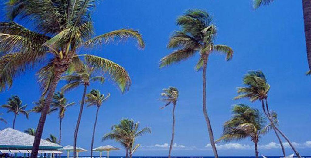 - Nisbet Plantation Beach Club **** - Nevis - St Kitts Nevis