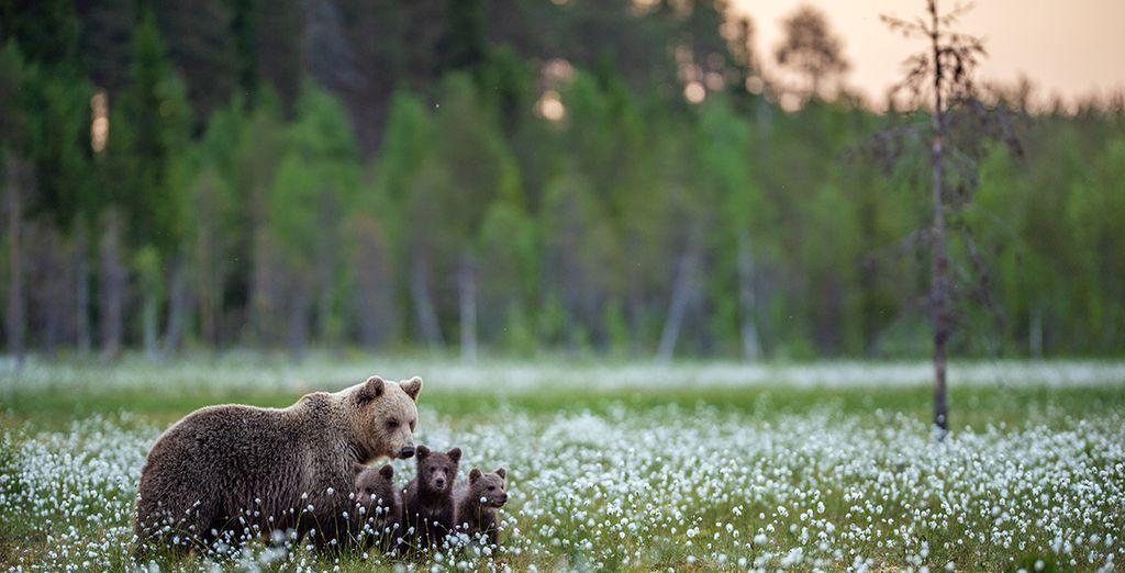 Finnish Wilderness with Wild Bear Observation & Optional Helsinki Stopover