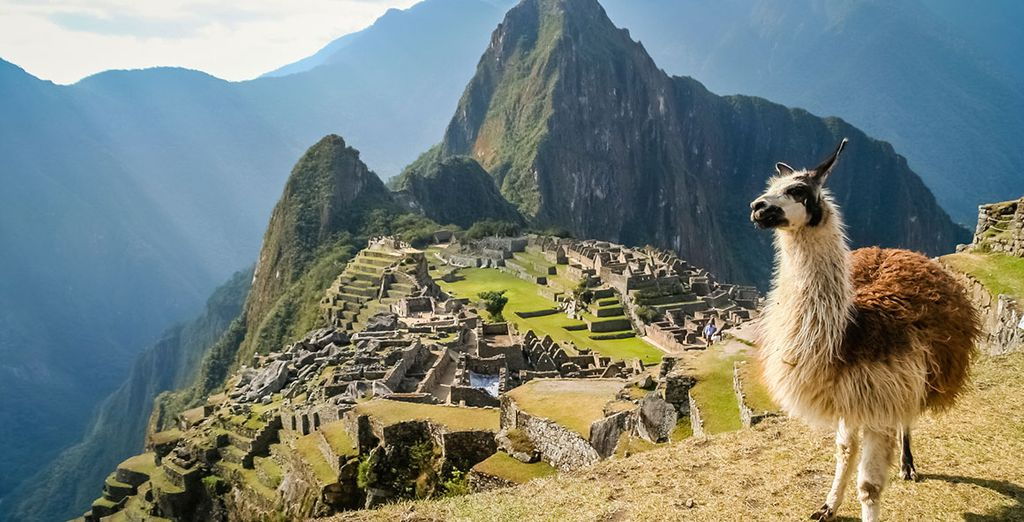 Get close to the llama of Machu Picchu