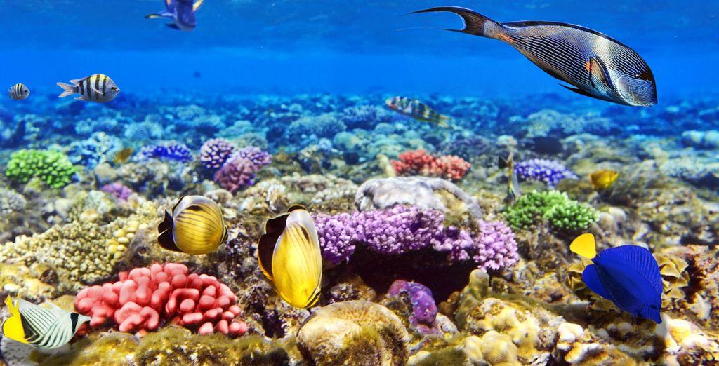 Home to an abundance of tropical marine life
