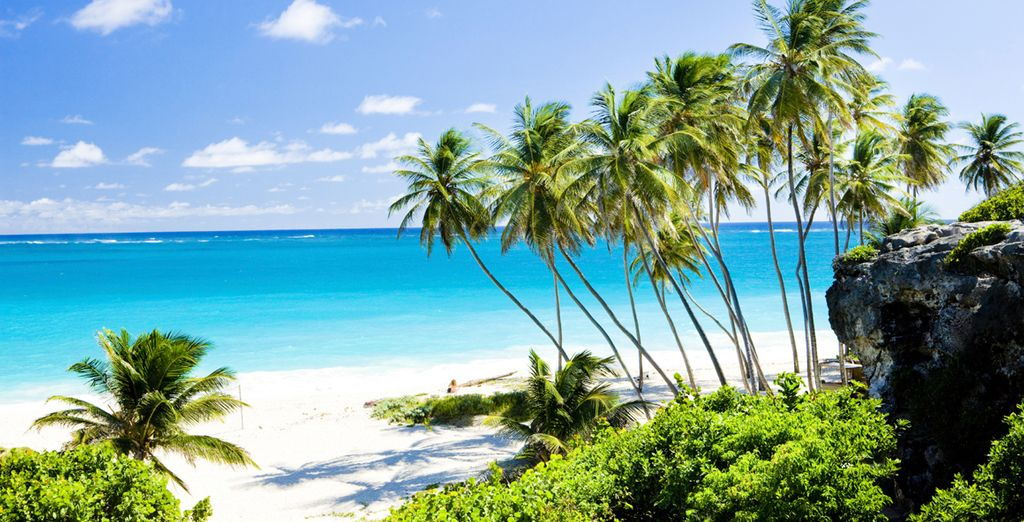 On the serene, sun-soaked island of Barbados