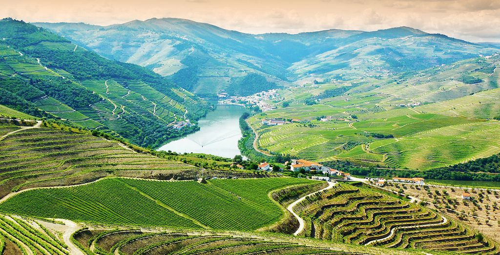 Discover the stunning Douro Valley