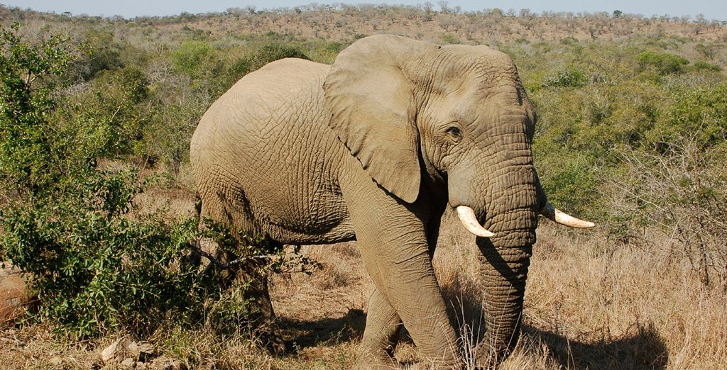 Discover the majestic wildlife of Hluhluwe Game Reserve