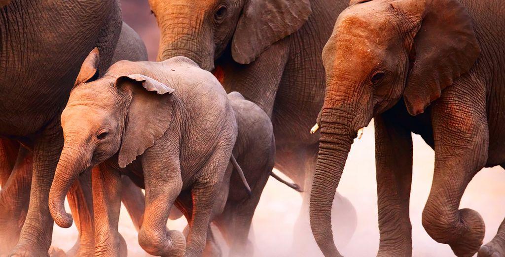 Thunderous elephants