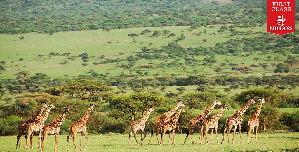 Admire the giraffes at the National Park