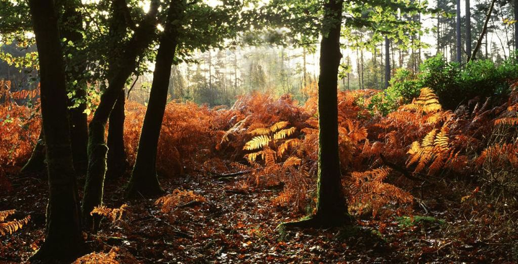 You are perfectly placed to experience the mystique of The New Forest