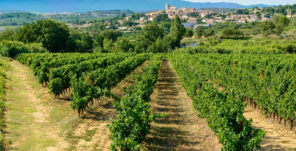 Deep in the heart of Languedoc