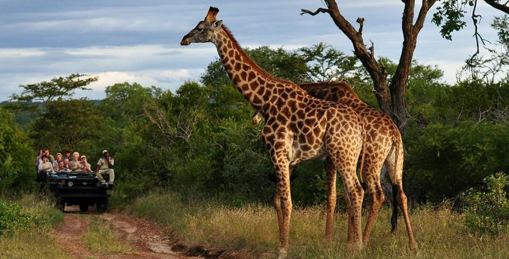 Next you will enjoy a 1, 2 or 3 night safari with daily game drives, admiring towering giraffes...