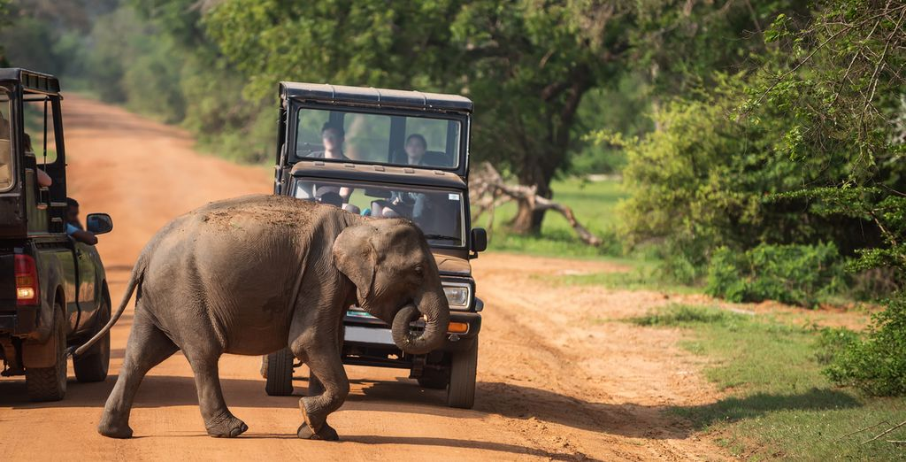 Discover Sri Lanka's wildlife on a jeep safari in Udawalawe National Park