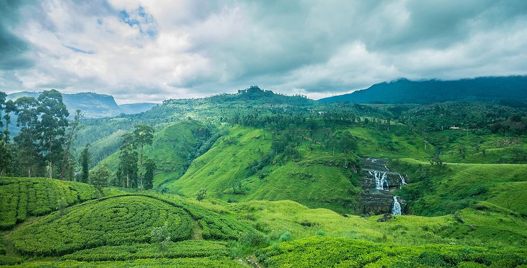 Soak up the serenity of the misty hillside tea plantations