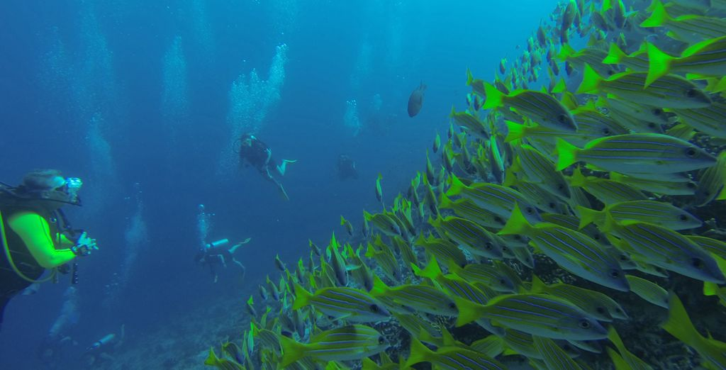 Explore the rich and colourful marine life