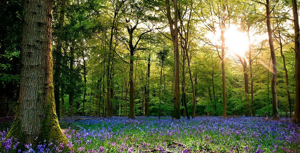 And pretty woodland scenery