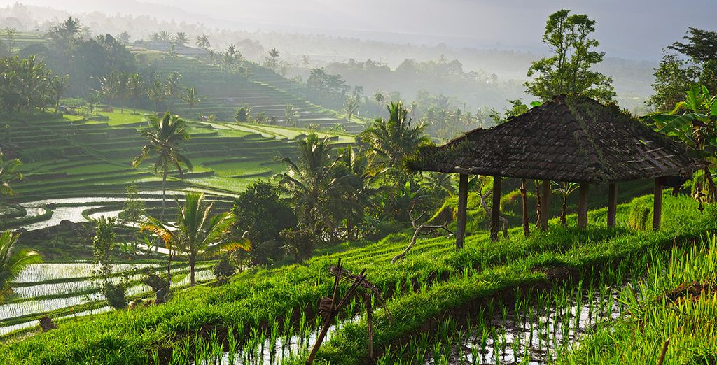 discover this gorgeous island with  excursions to local villages and temples