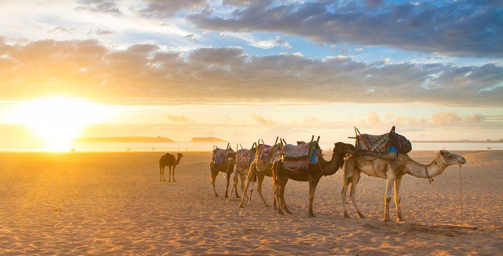 Book a break in laid back Essaouira