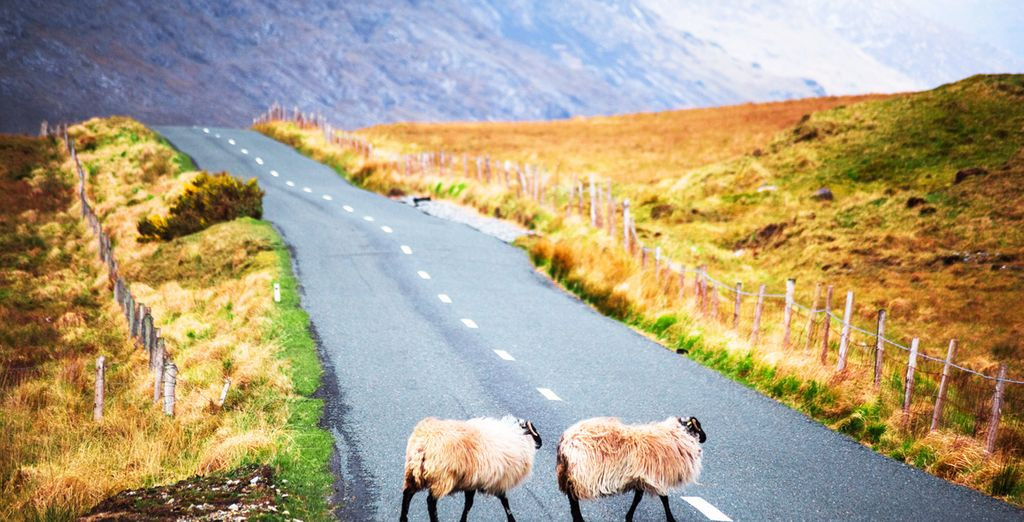 Hit the scenic roads with your car rental