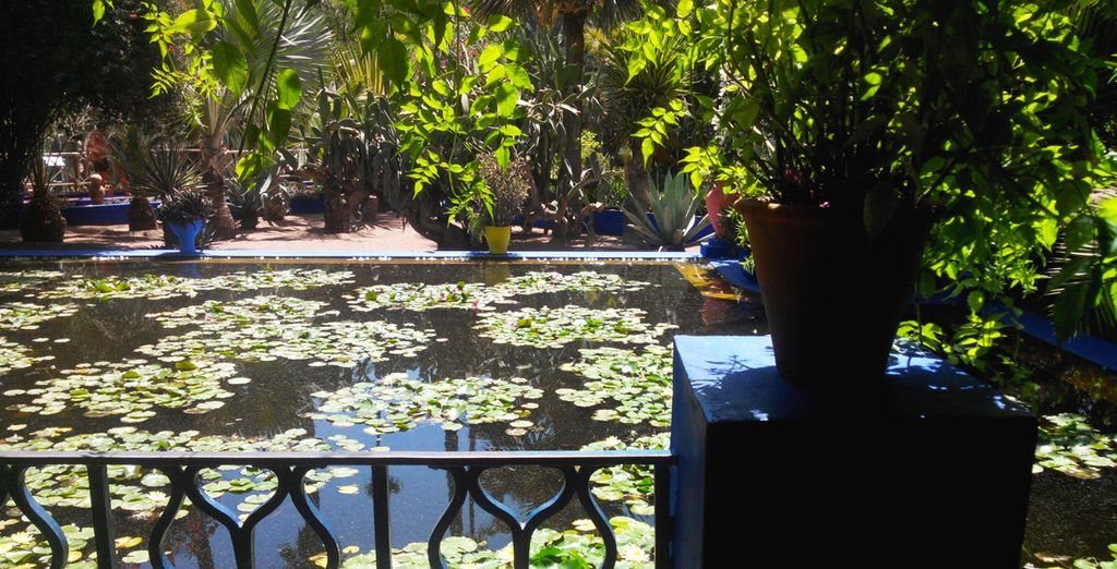 Before returning to your hotel, go through the Majorelle gardens