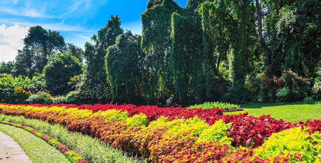Explore lush gardens