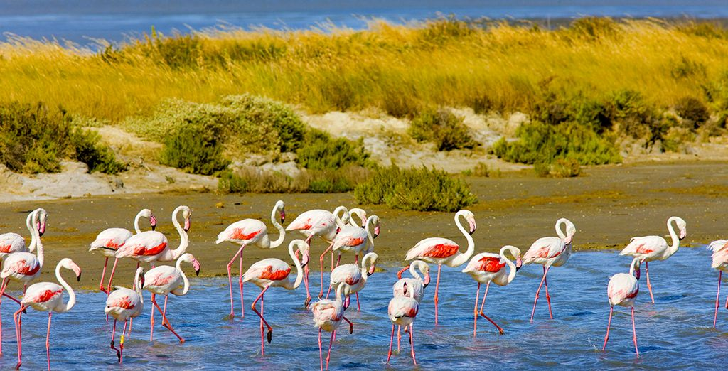 And local attractions such as Les Salins du Midi - a protected nature reserve