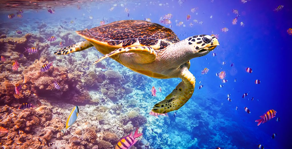 Or dive beneath the waves to explore the amazing marine life
